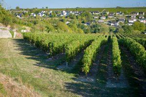 Vue du vignoble du Domaine de la Perruche sur le village de Montsoreau