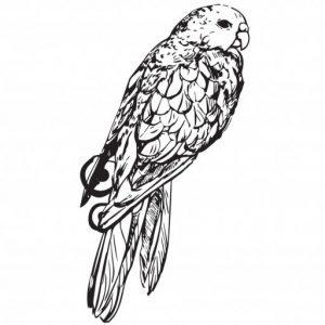 Symbole du Domaine de la Perruche