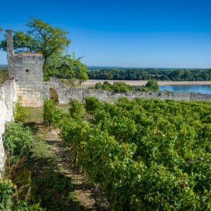 Une partie du vignoble du Domaine de la Perruche sur les bords de la Loire
