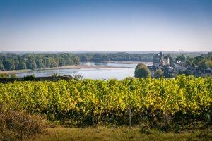 Domaine de la Perruche - Vue sur la Loire et le Village de Montsoreau